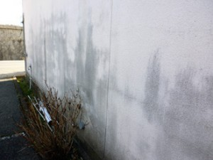 モルタル外壁カビ