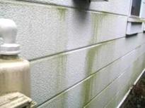 外壁のカビや藻