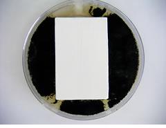 ナノコンポジット防カビ効果